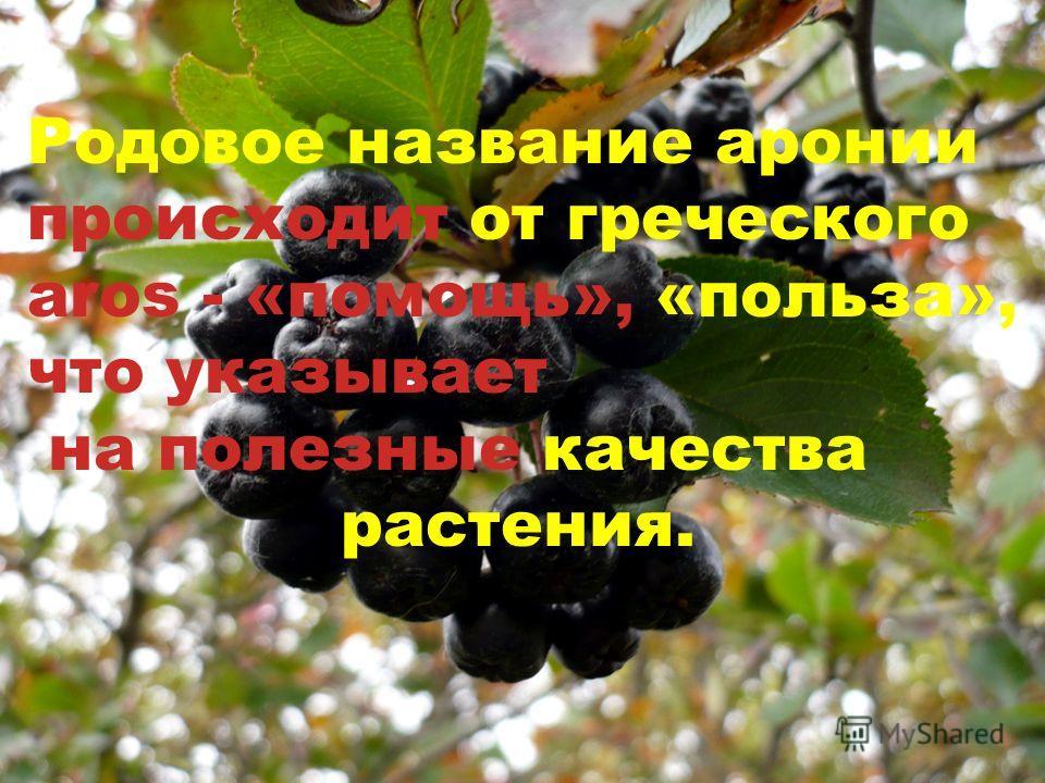 Родовое название аронии происходит от греческого aros - «помощь», «польза», что указывает на полезные качества растения.