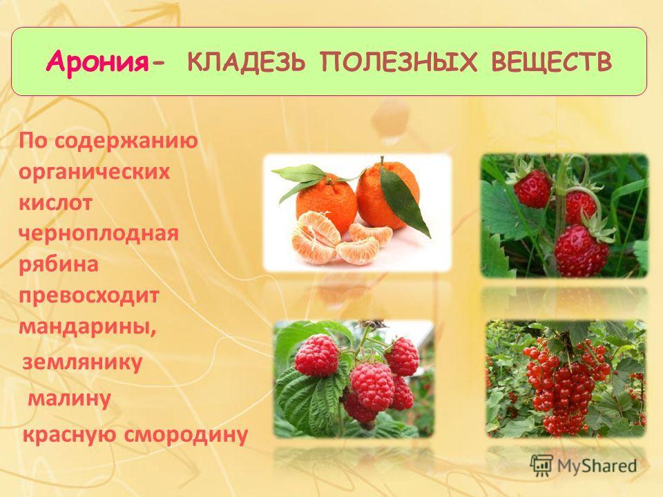 По содержанию органических кислот черноплодная рябина превосходит мандарины, Арония- КЛАДЕЗЬ ПОЛЕЗНЫХ ВЕЩЕСТВ землянику малину красную смородину