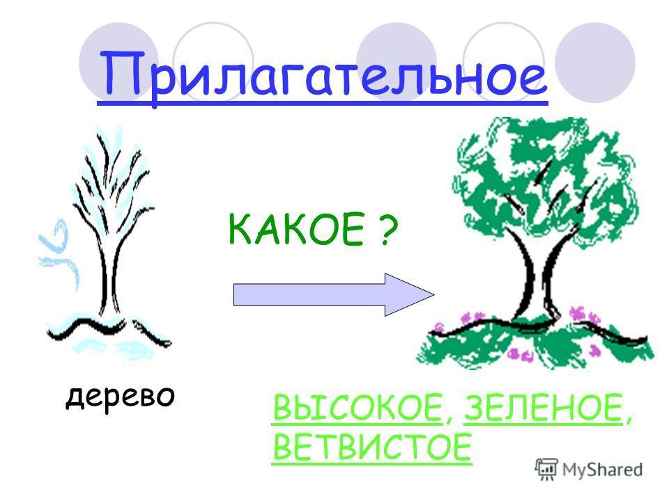 Прилагательное дерево КАКОЕ ? ВЫСОКОЕ, ЗЕЛЕНОЕ, ВЕТВИСТОЕ