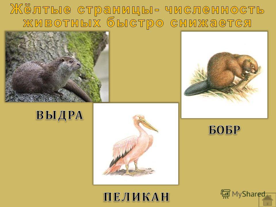 Самые дорогие и редкие монеты Российской Федерации