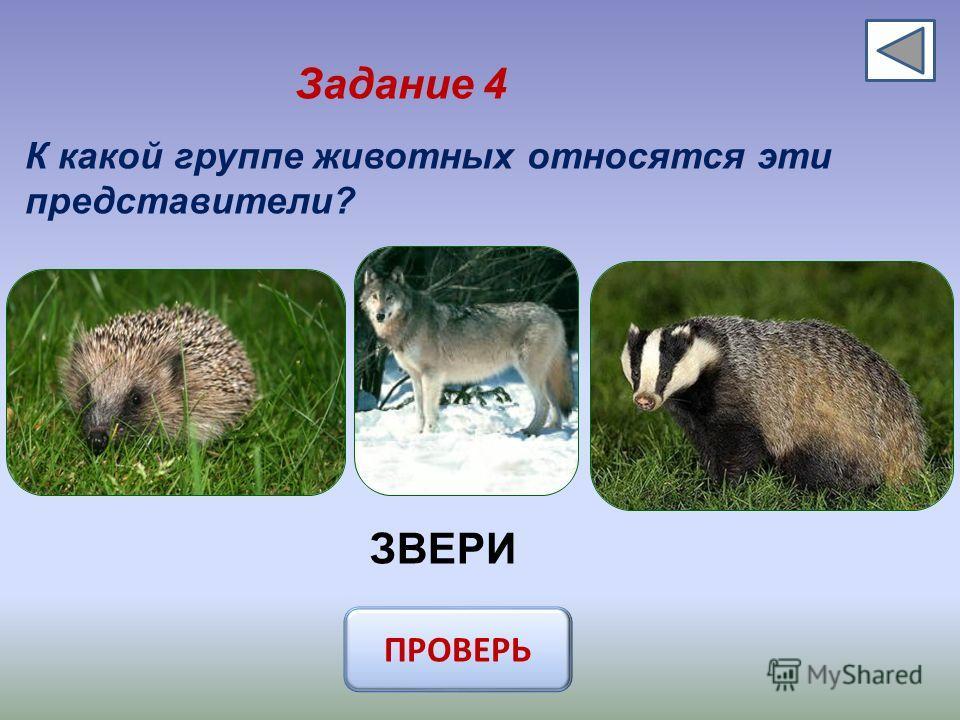Задание 4 К какой группе животных относятся эти представители? ЗВЕРИ ПРОВЕРЬ