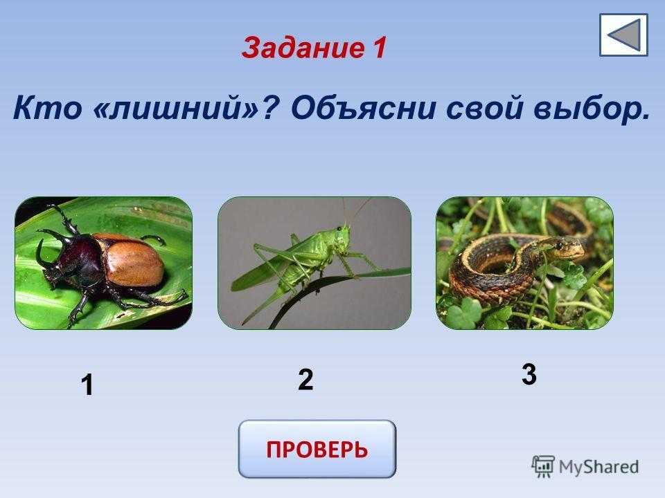 Задание 1 Кто «лишний»? Объясни свой выбор. 1 2 3 ПРОВЕРЬ