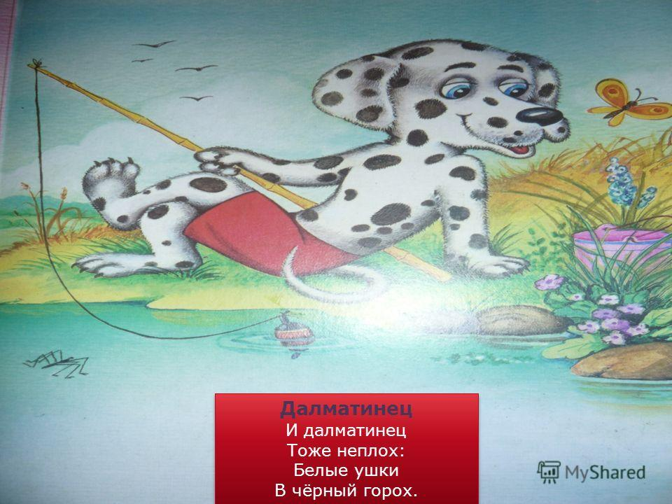 Далматинец И далматинец Тоже неплох: Белые ушки В чёрный горох. Далматинец И далматинец Тоже неплох: Белые ушки В чёрный горох.