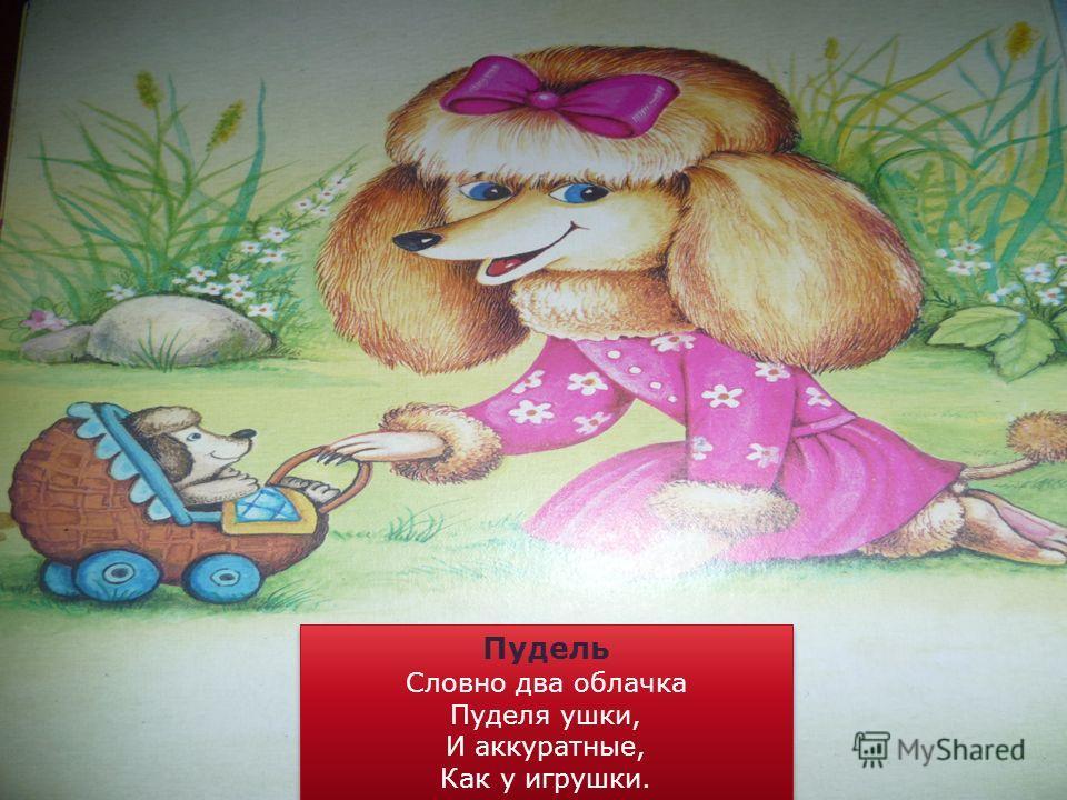 Пудель Словно два облачка Пуделя ушки, И аккуратные, Как у игрушки. Пудель Словно два облачка Пуделя ушки, И аккуратные, Как у игрушки.
