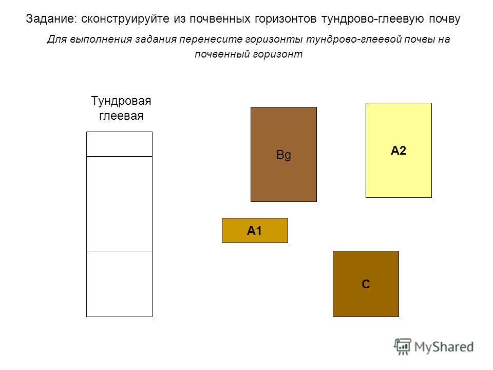 Задание: сконструируйте из почвенных горизонтов тундрово-глеевую почву Для выполнения задания перенесите горизонты тундрово-глеевой почвы на почвенный горизонт А1 ВgВg C А2 Тундровая глеевая