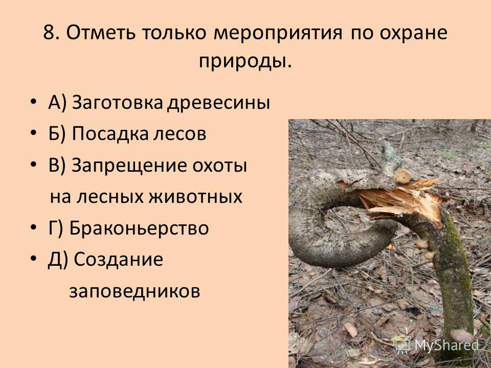 7. Какое звено в цепи питания пропущено? Осина заяц ? А) лось Б) олень В) рысь Г) бурундук