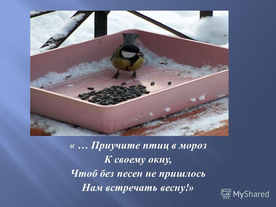 « … Приучите птиц в мороз К своему окну, Чтоб без песен не пришлось Нам встречать весну !»