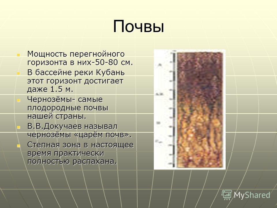 Почвы Мощность перегнойного горизонта в них-50-80 см. Мощность перегнойного горизонта в них-50-80 см. В бассейне реки Кубань этот горизонт достигает даже 1.5 м. В бассейне реки Кубань этот горизонт достигает даже 1.5 м. Чернозёмы- самые плодородные п
