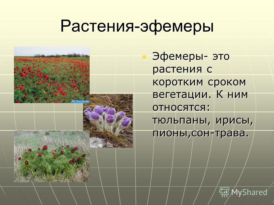 Растения-эфемеры Эфемеры- это растения с коротким сроком вегетации. К ним относятся: тюльпаны, ирисы, пионы,сон-трава. Эфемеры- это растения с коротким сроком вегетации. К ним относятся: тюльпаны, ирисы, пионы,сон-трава.