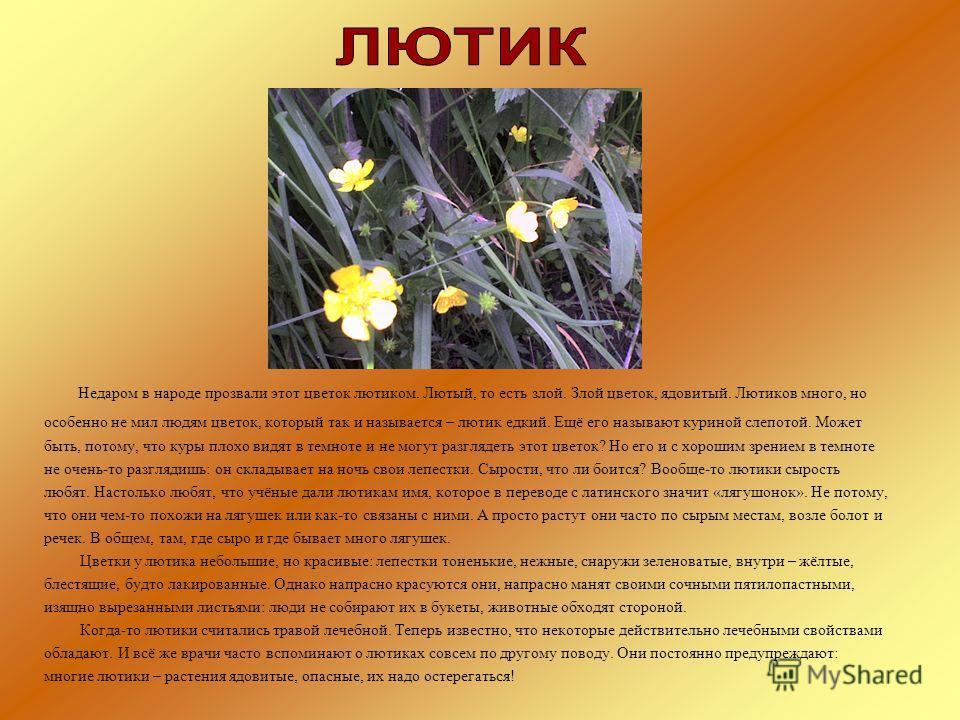 Недаром в народе прозвали этот цветок лютиком. Лютый, то есть злой. Злой цветок, ядовитый. Лютиков много, но особенно не мил людям цветок, который так и называется – лютик едкий. Ещё его называют куриной слепотой. Может быть, потому, что куры плохо в