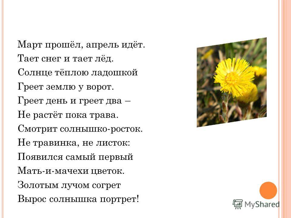Март прошёл, апрель идёт. Тает снег и тает лёд. Солнце тёплою ладошкой Греет землю у ворот. Греет день и греет два – Не растёт пока трава. Смотрит солнышко-росток. Не травинка, не листок: Появился самый первый Мать-и-мачехи цветок. Золотым лучом согр