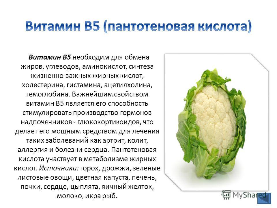 Витамин В5 необходим для обмена жиров, углеводов, аминокислот, синтеза жизненно важных жирных кислот, холестерина, гистамина, ацетилхолина, гемоглобина. Важнейшим свойством витамин В5 является его способность стимулировать производство гормонов надпо