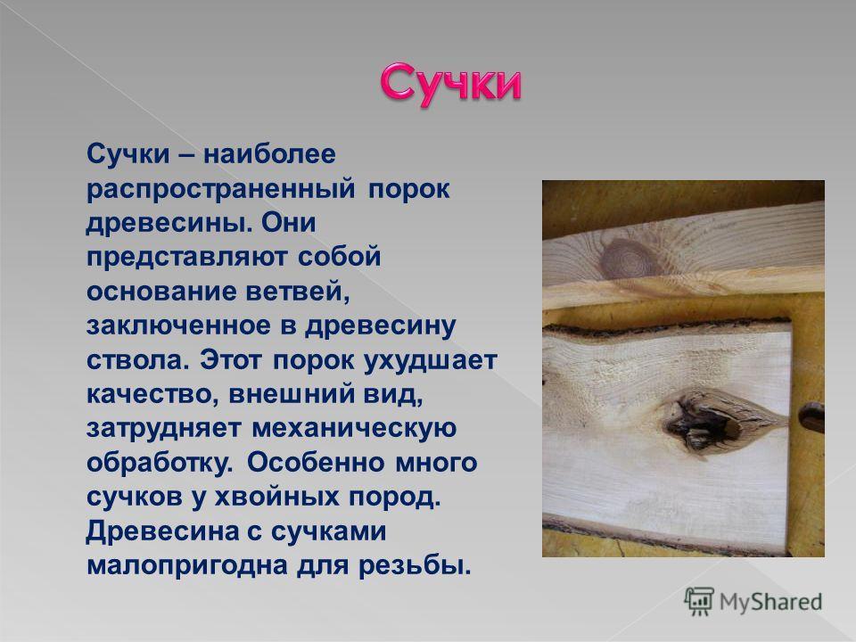 Сучки – наиболее распространенный порок древесины. Они представляют собой основание ветвей, заключенное в древесину ствола. Этот порок ухудшает качество, внешний вид, затрудняет механическую обработку. Особенно много сучков у хвойных пород. Древесина