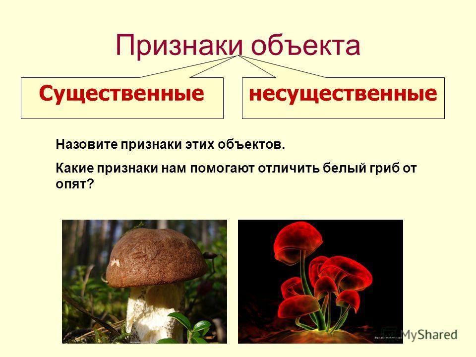 Признаки объекта Существенные несущественные Назовите признаки этих объектов. Какие признаки нам помогают отличить белый гриб от опят?