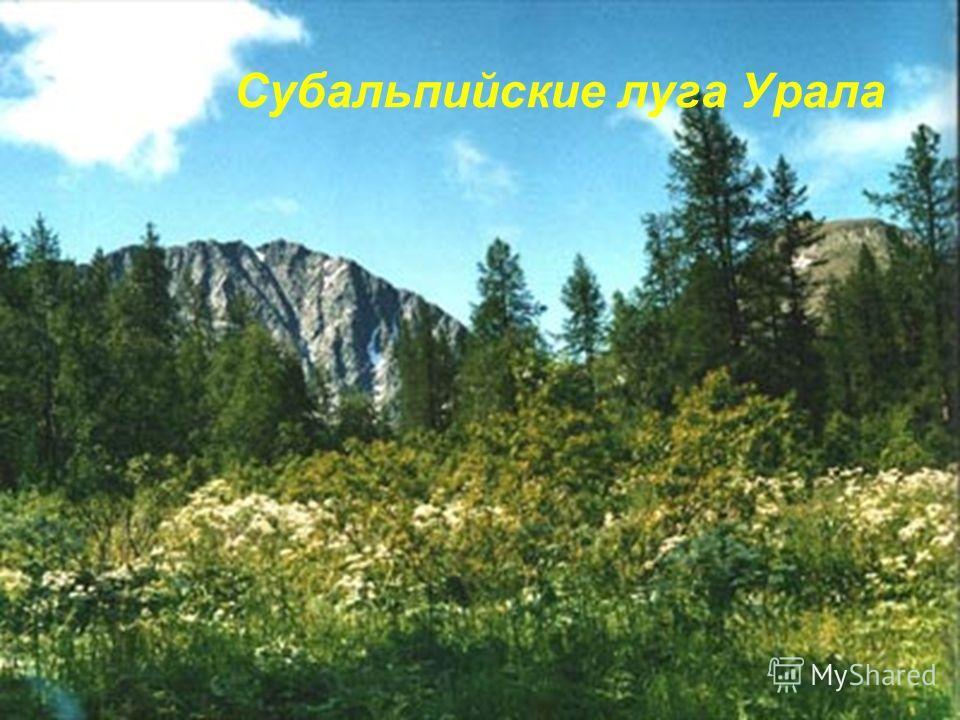 Субальпийские луга Урала