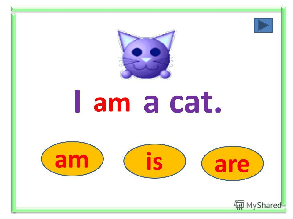 I ….. a cat. am is are am