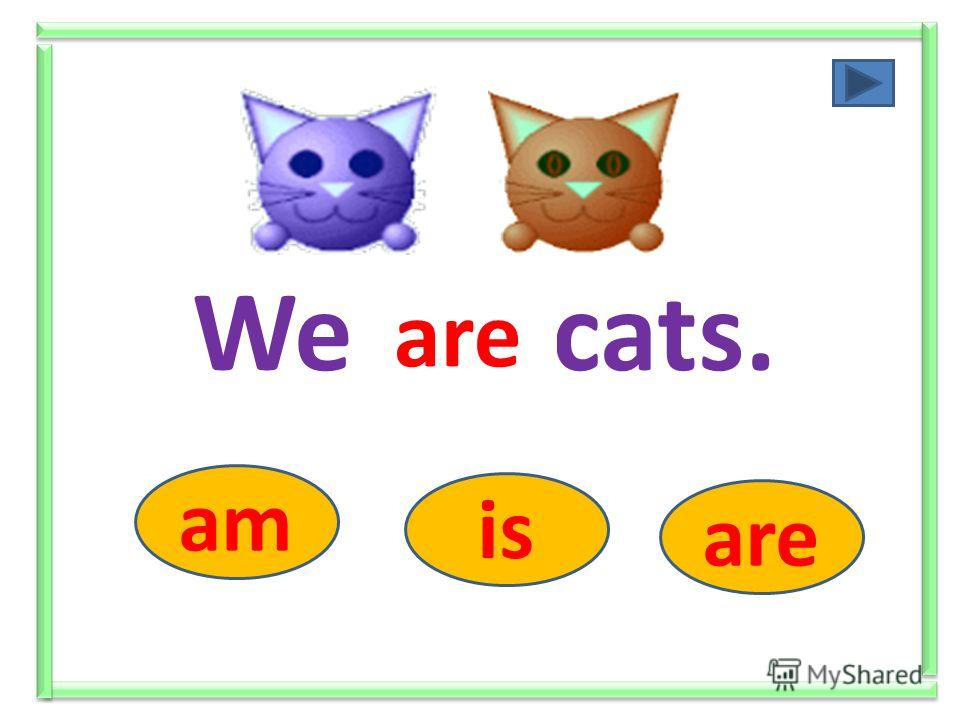 We ….. cats. am is are