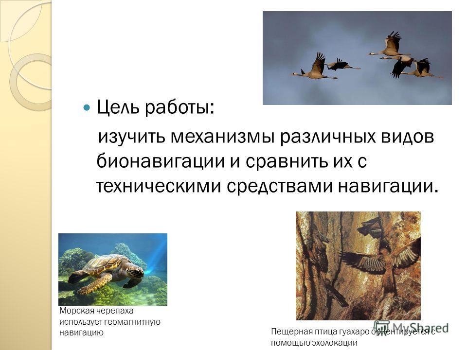 Цель работы: изучить механизмы различных видов бионавигации и сравнить их с техническими средствами навигации. Морская черепаха использует геомагнитную навигацию Пещерная птица гуахаро ориентируется с помощью эхолокации