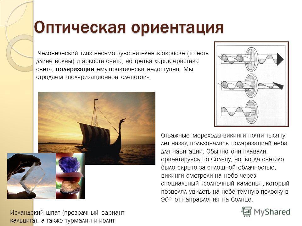 Оптическая ориентация Отважные мореходы-викинги почти тысячу лет назад пользовались поляризацией неба для навигации. Обычно они плавали, ориентируясь по Солнцу, но, когда светило было скрыто за сплошной облачностью, викинги смотрели на небо через спе