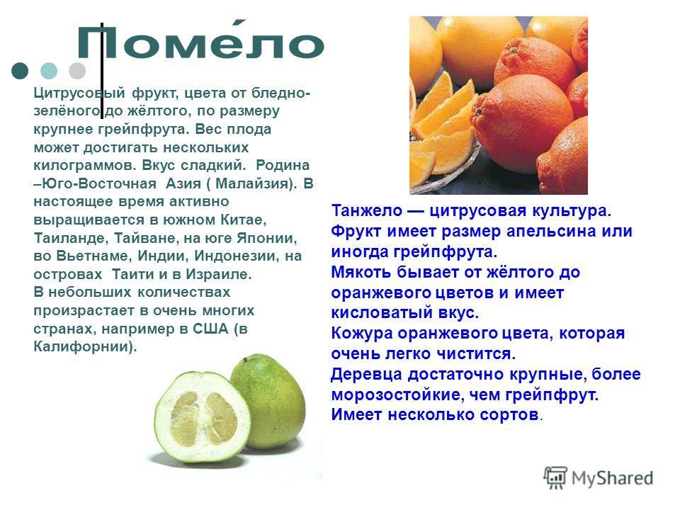 Цитрусовый фрукт, цвета от бледно- зелёного до жёлтого, по размеру крупнее грейпфрута. Вес плода может достигать нескольких килограммов. Вкус сладкий. Родина –Юго-Восточная Азия ( Малайзия). В настоящее время активно выращивается в южном Китае, Таила
