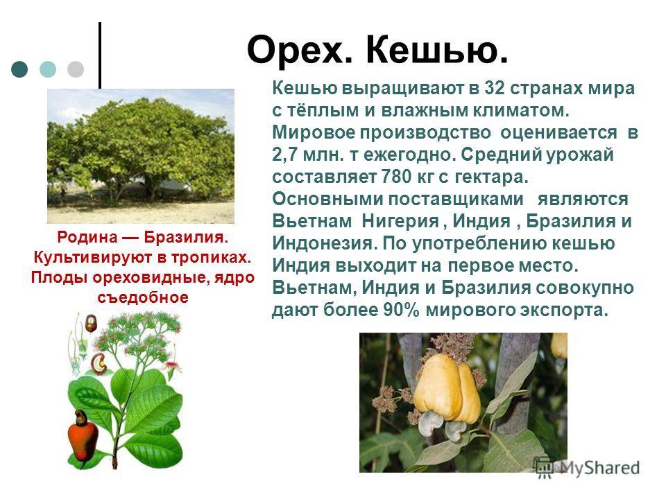 Орех. Кешью. Родина Бразилия. Культивируют в тропиках. Плоды ореховидные, ядро съедобное Кешью выращивают в 32 странах мира с тёплым и влажным климатом. Мировое производство оценивается в 2,7 млн. т ежегодно. Средний урожай составляет 780 кг с гектар