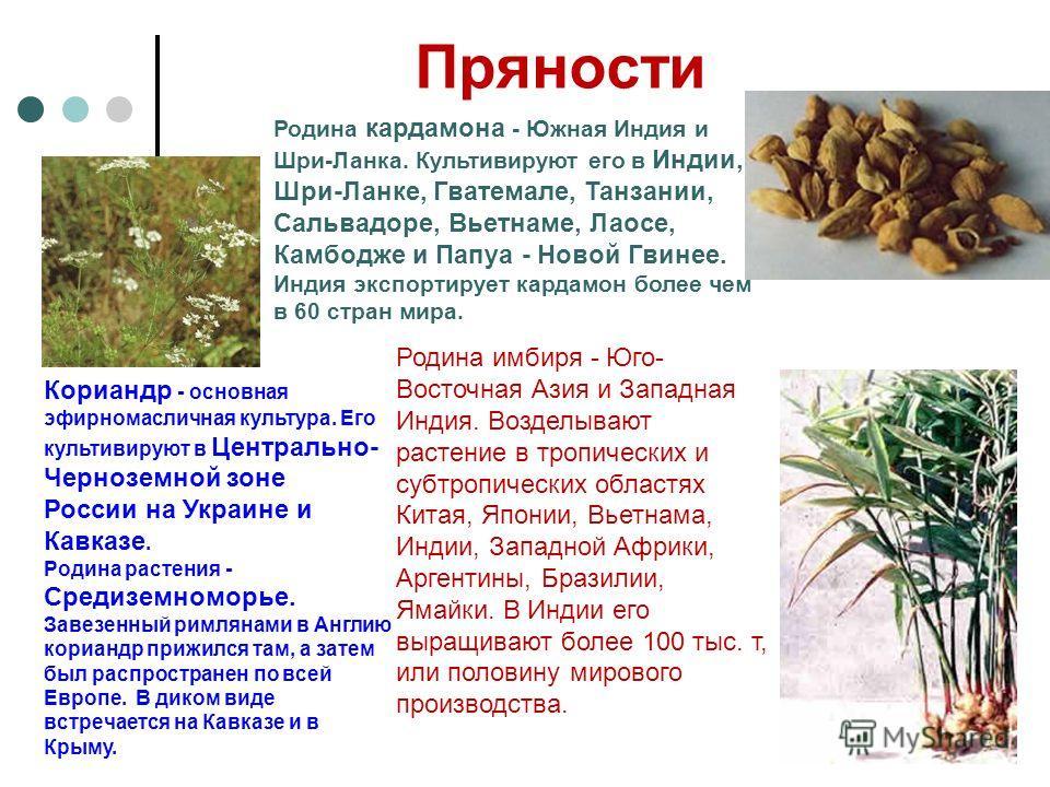 Пряности Кориандр - основная эфирномасличная культура. Его культивируют в Центрально- Черноземной зоне России на Украине и Кавказе. Родина растения - Средиземноморье. Завезенный римлянами в Англию кориандр прижился там, а затем был распространен по в