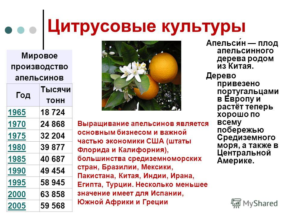 Цитрусовые культуры Апельси́н плод апельсинного дерева родом из Китая. Дерево привезено португальцами в Европу и растёт теперь хорошо по всему побережью Средиземного моря, а также в Центральной Америке. Мировое производство апельсинов Год Тысячи тонн
