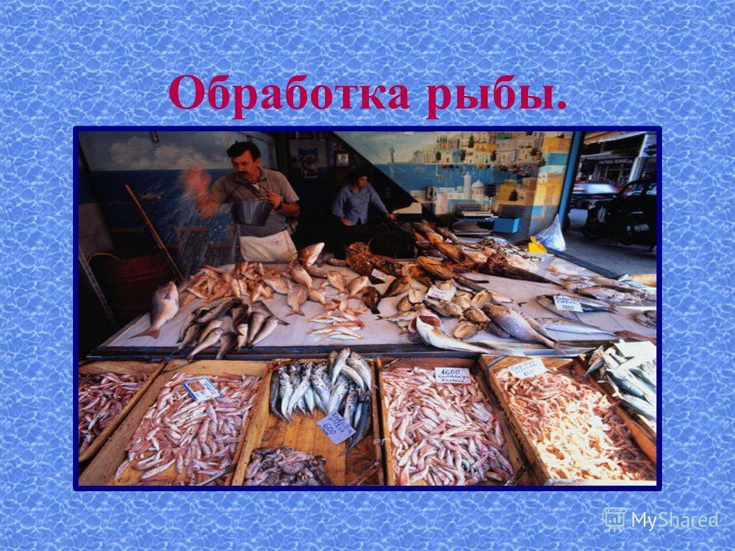 Обработка рыбы.