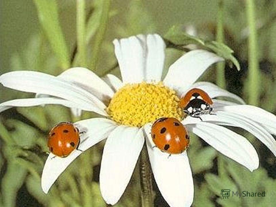 Насекомые насекомые томской области