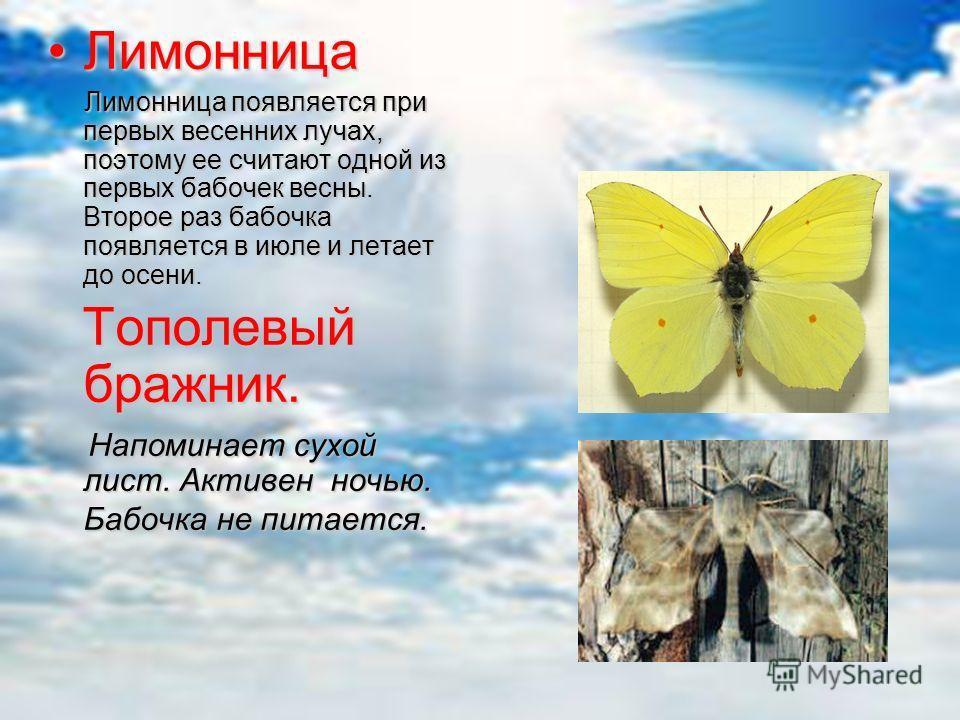 Виды Пестрянка жимолостная.Пестрянка жимолостная. Они медлительны и неуклюжи, плохо летают. Стоит взять бабочку в руки - она притворяется мертвой. Они медлительны и неуклюжи, плохо летают. Стоит взять бабочку в руки - она притворяется мертвой. Дневно