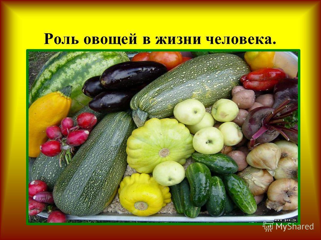 Роль овощей в жизни человека.