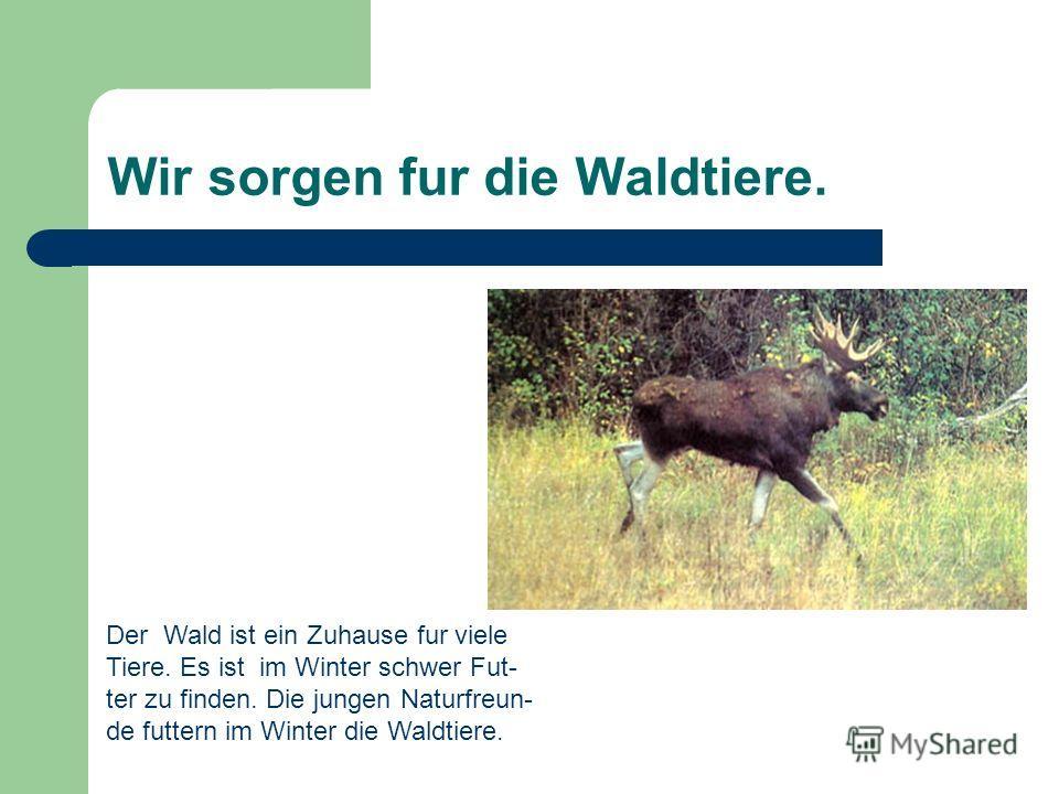 Wir sorgen fur die Waldtiere. Der Wald ist ein Zuhause fur viele Tiere. Es ist im Winter schwer Fut- ter zu finden. Die jungen Naturfreun- de futtern im Winter die Waldtiere.