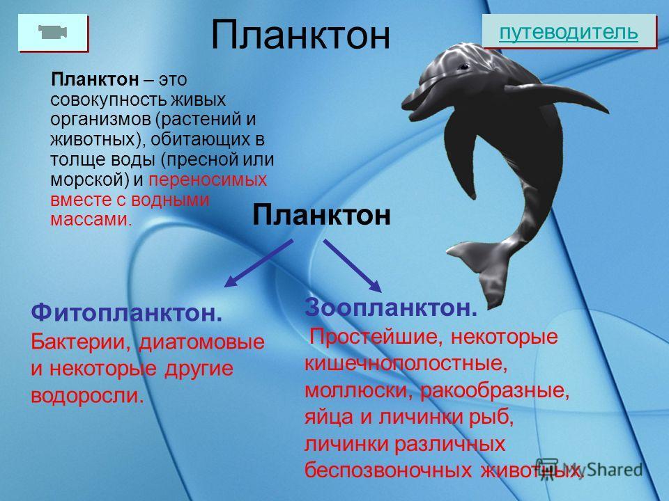 Холодные глубины океана населены мало. Растений там нет. На глубине обнаружены одноклеточные организмы, а также губки, черви, ракообразные, моллюски и даже рыбы. путеводитель Красные губки Червь Саббелид Моллюск танцовщик