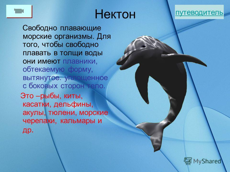 Планктон Планктон – это совокупность живых организмов (растений и животных), обитающих в толще воды (пресной или морской) и переносимых вместе с водными массами. Фитопланктон. Бактерии, диатомовые и некоторые другие водоросли. Зоопланктон. Простейшие