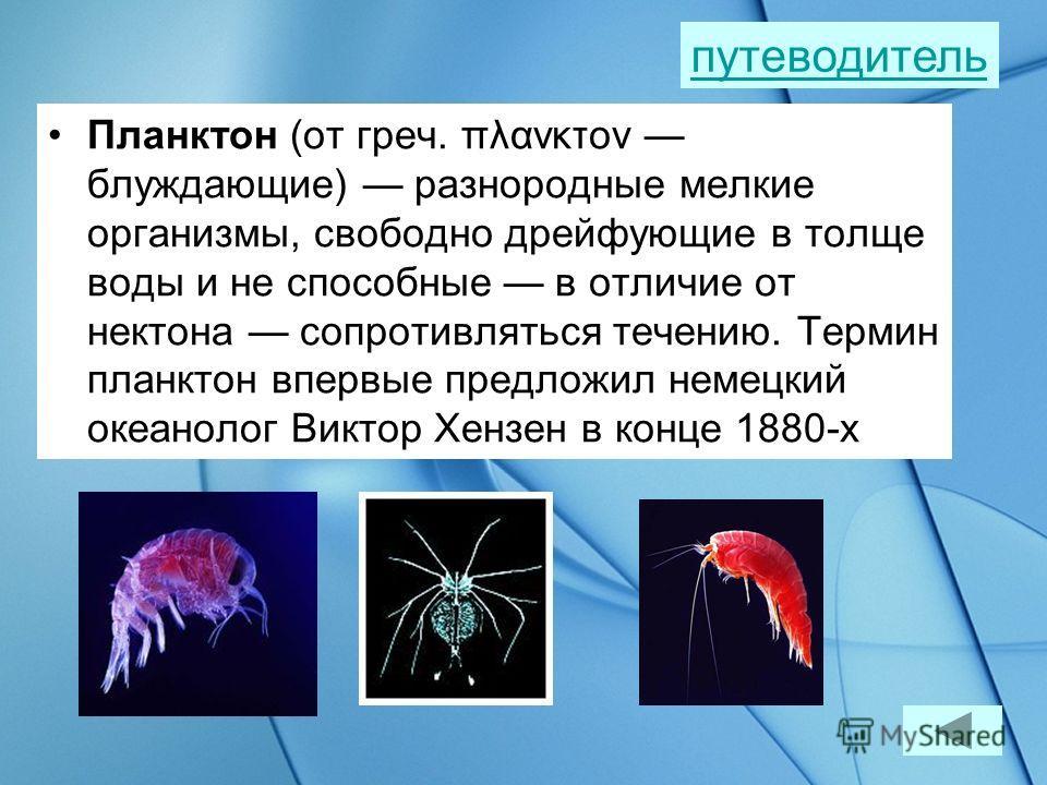 Бентос (от греч. bentos глубина) это более 150 000 видов морских организмов из 200 000 видов ныне известных морских организмов путеводитель Морская звезда Морской ёж