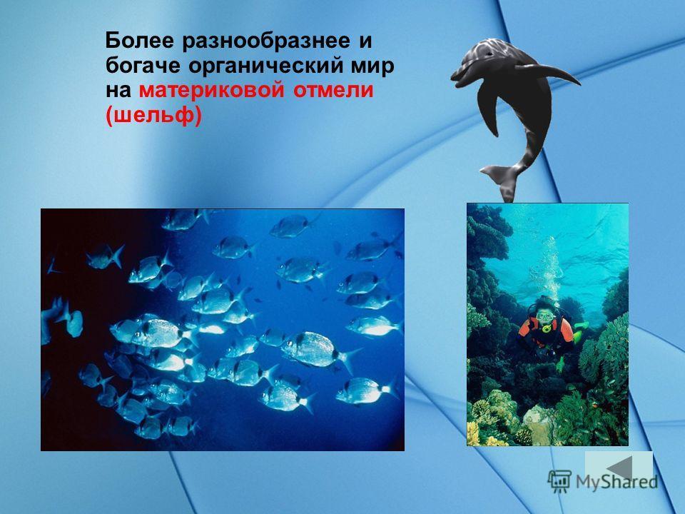 Океан по условиям обитания можно разделить на три части Материковая отмель. Просторы в дали от берегов Глубины океана путеводитель