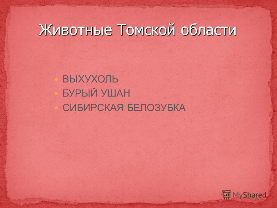 Животные Томской области ВЫХУХОЛЬ БУРЫЙ УШАН СИБИРСКАЯ БЕЛОЗУБКА