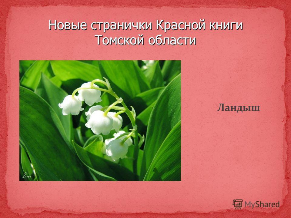 Новые странички Красной книги Томской области Ландыш