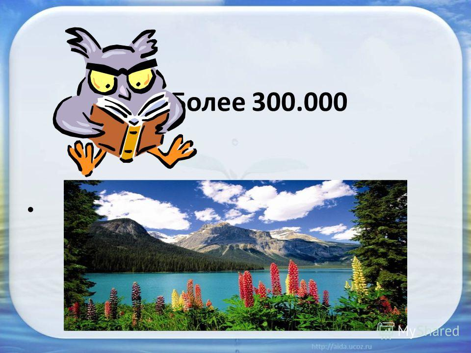 Более 300.000
