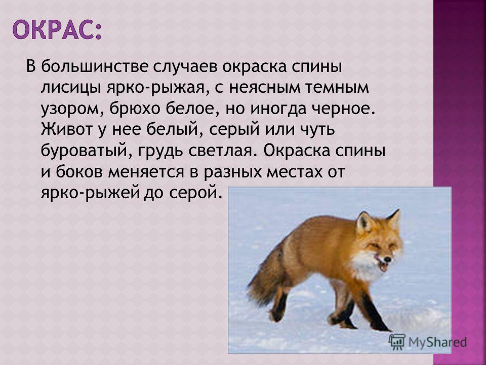 В большинстве случаев окраска спины лисицы ярко-рыжая, с неясным темным узором, брюхо белое, но иногда черное. Живот у нее белый, серый или чуть буроватый, грудь светлая. Окраска спины и боков меняется в разных местах от ярко-рыжей до серой.