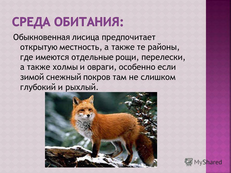 Обыкновенная лисица предпочитает открытую местность, а также те районы, где имеются отдельные рощи, перелески, а также холмы и овраги, особенно если зимой снежный покров там не слишком глубокий и рыхлый.