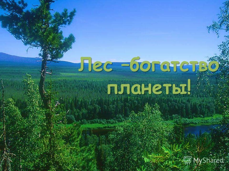 Лес –богатство планеты!