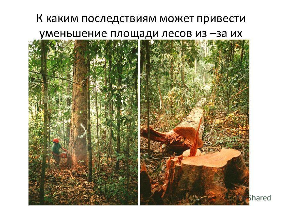 К каким последствиям может привести уменьшение площади лесов из –за их вырубки и лесных пожаров?