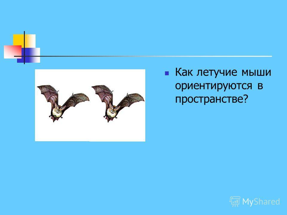 Как летучие мыши ориентируются в пространстве?