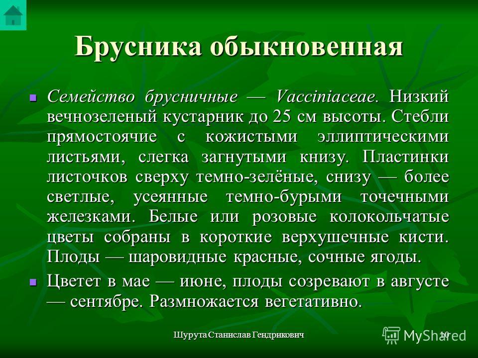 Шурута Станислав Гендрикович9 Брусника обыкновенная Vaccinium vitis idaea L. Рис