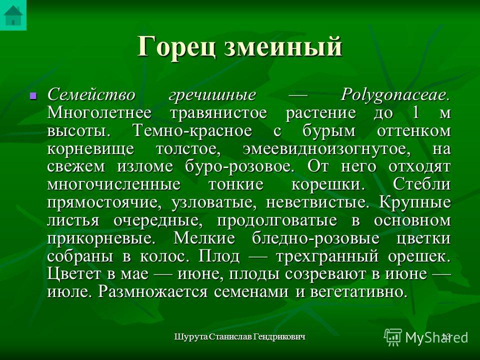Шурута Станислав Гендрикович12 Горец змеиный Polygonum bistorta L. Рис
