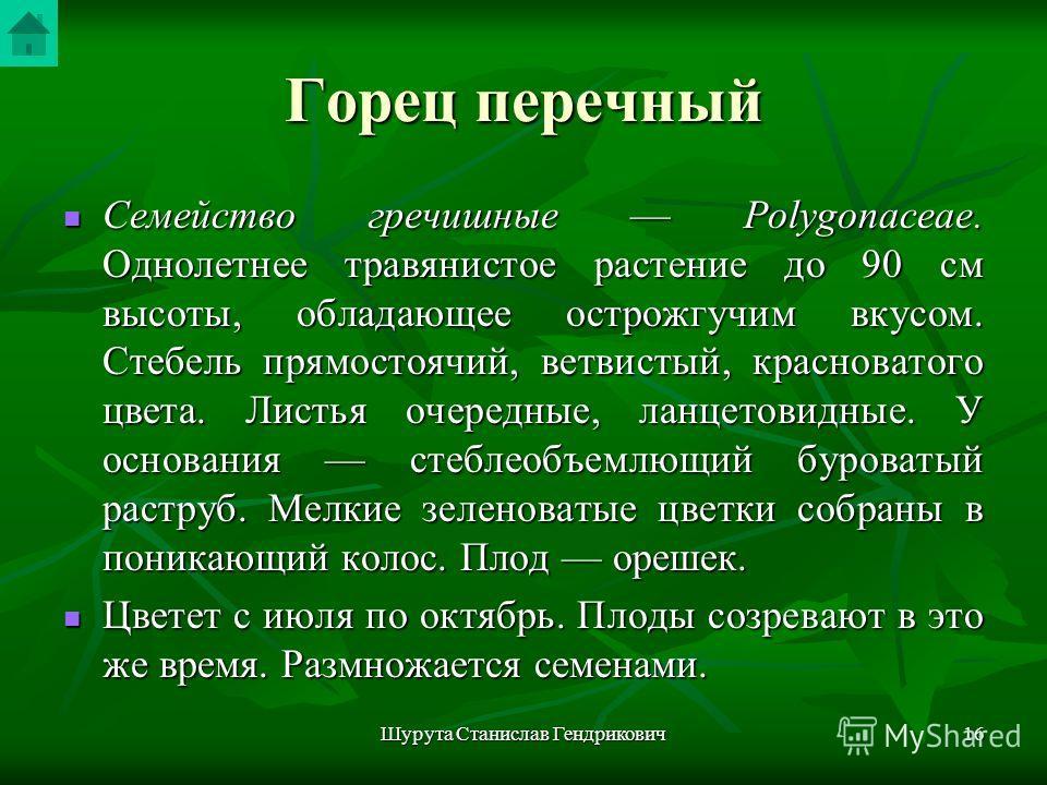 Шурута Станислав Гендрикович15 Горец перечный Polygonum hydropiper L. Рис