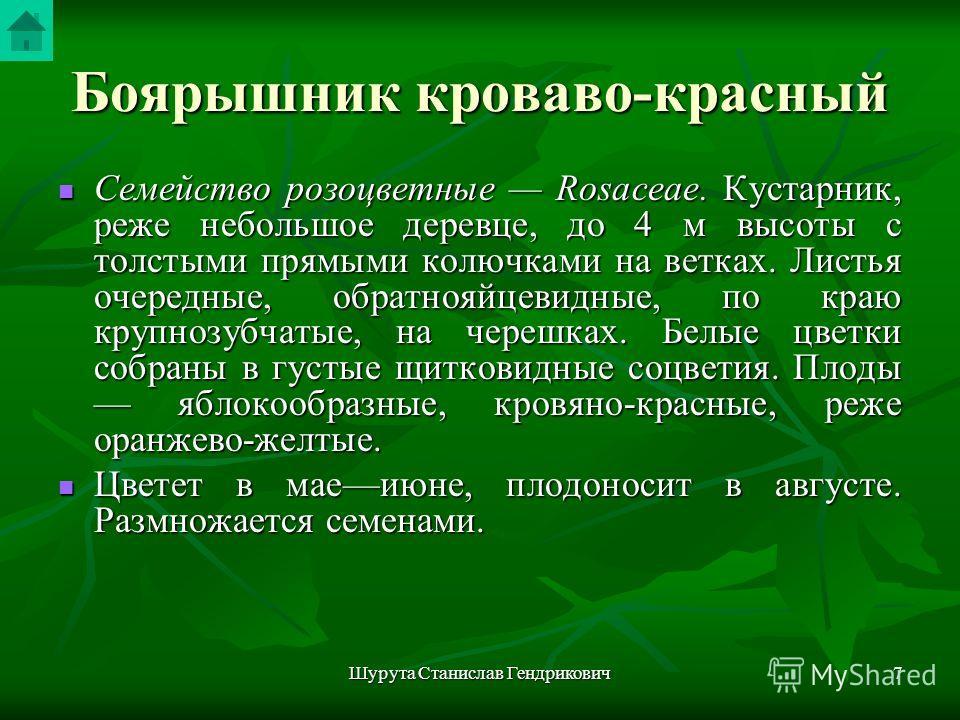 Шурута Станислав Гендрикович6 Боярышник кроваво- красный Grataegus sanguinea Pall. Рис