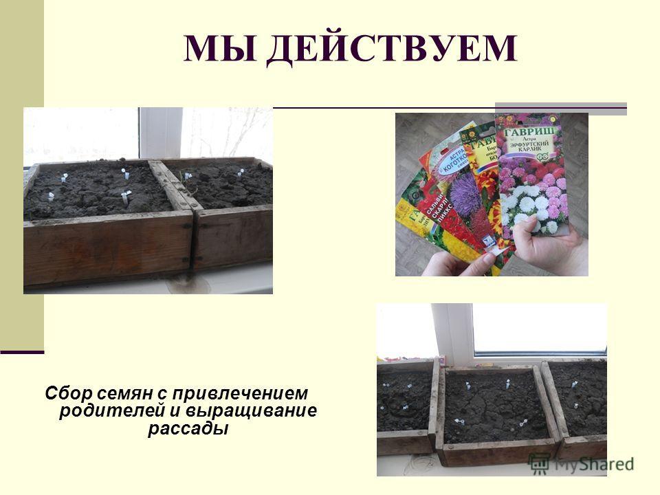 МЫ ДЕЙСТВУЕМ Сбор семян с привлечением родителей и выращивание рассады