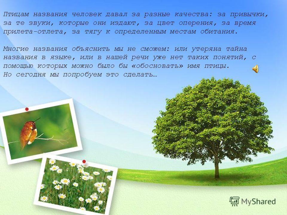 МКОУ «Старо-Короткинская ООШ»